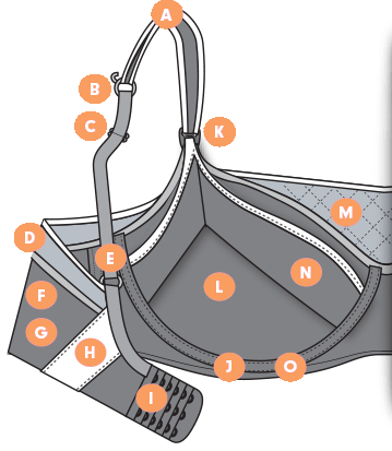 Bra Features Illustration