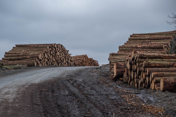 logs beside road