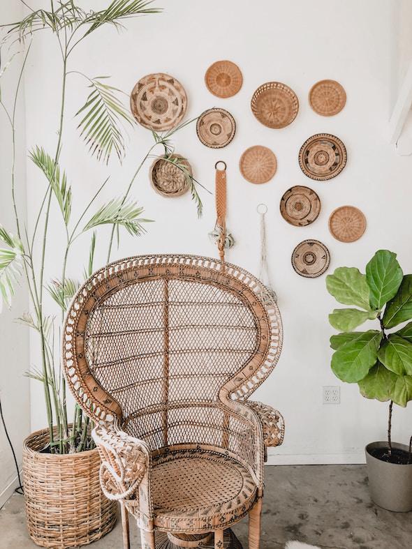 plant, chair, furniture
