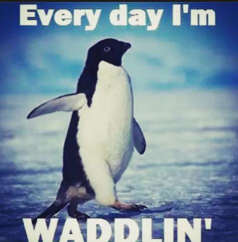 waddlin