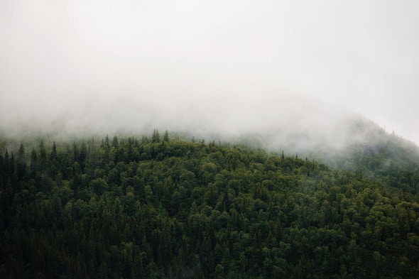white fog on forest; Image Source: Jon Flobrant (Unsplash)